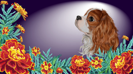 Realistically painted in vector head Cavalier King Charles spaniel sad dog framed by marigold garden flowers and leaves invitation card isolated on dark background