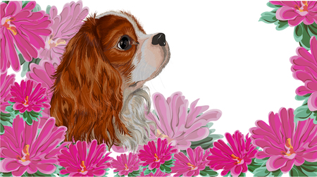 isolated realistically painted in vector dog breed cavalier king spaniel on asymmetric background of flowers pink asters, vet card