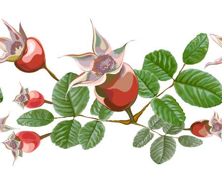 modello di fiore senza soluzione di continuità, vettore, disposizione di frutti e foglie di fianchi da giardino, per la decorazione e pennello isolato