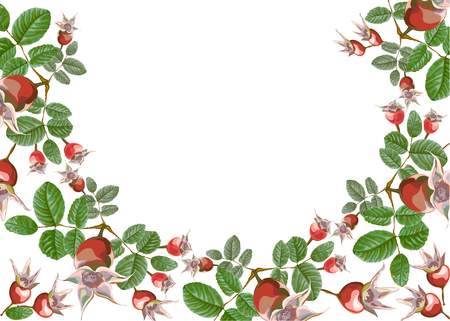 Composición de la mitad de una guirnalda de frutas y hojas de una rosa de perro de jardín, para decoración aislada, floristería, en la ilustración vectorial.