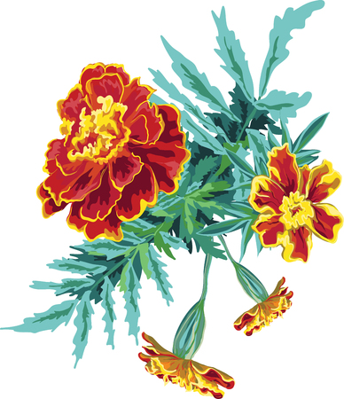 Bouquet from marigold flowers, calendula , orange bright hand painted in vector , leaves and buds, isolated, brush