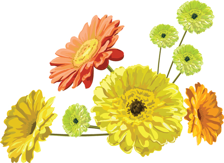 Gerbera flowers greeting card graceful bouquet, yellow, orange and green plants painted vector isolated. Illustration