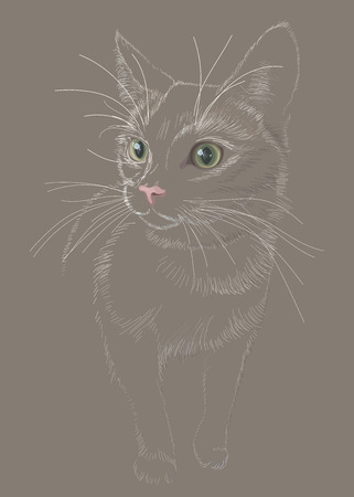 Figure cat sketch in lines vector, alert and nervous, incompleteness, with bright eyes and nose, fluffy on a dark background  イラスト・ベクター素材