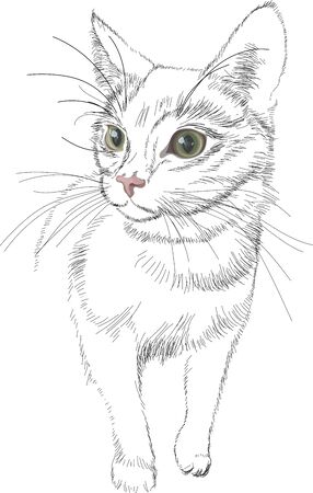 Sketch vector black lines cat with green bright realistic eyes, ready to attack, on white background