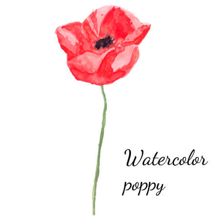 gently: Watercolor floral decoration. Watercolor vector illustration of poppies Illustration