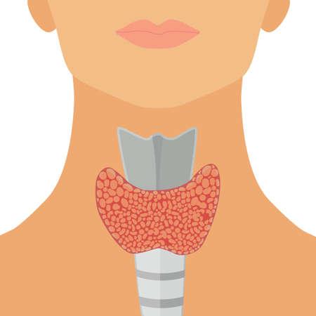 Glándula tiroides en estilo plano para web, infografía y diseño médico. Ilustración del vector. Aislados en fondo blanco