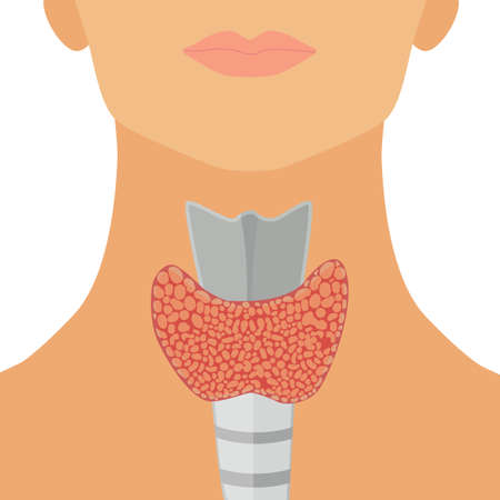 Thyroid gland in flat style for web, infographics and medical design. Vector illustration. Isolated on white background