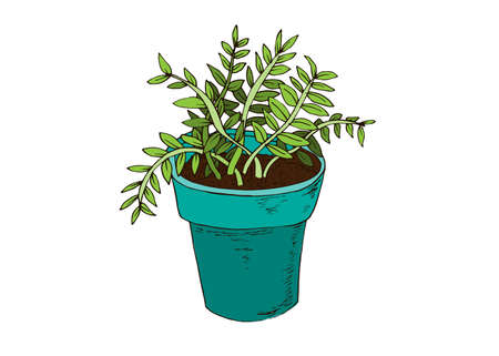 Beans flower pot in hand drawn style. Vector illustration