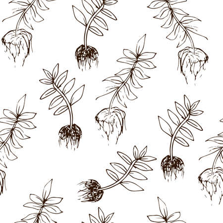 Beans seamless pattern in hand drawn style. Vector illustration Banque d'images - 123825121