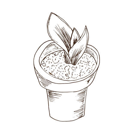 Flower pot with aloe vera in hand drawn style. Vector illustration. Illustration