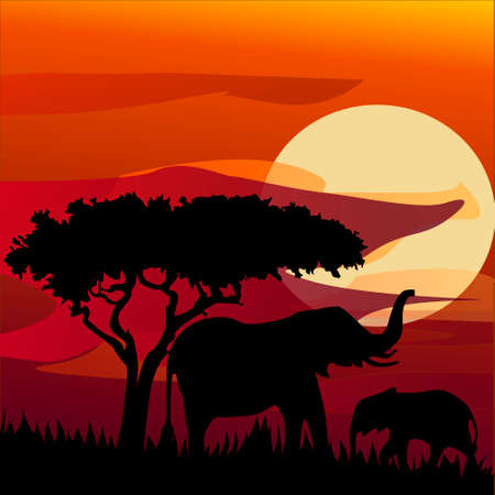 silhouette view of elephant at sunset Stok Fotoğraf - 80606115