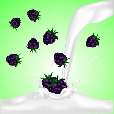 Blackberries falling into the milky splash. Vector illustration.