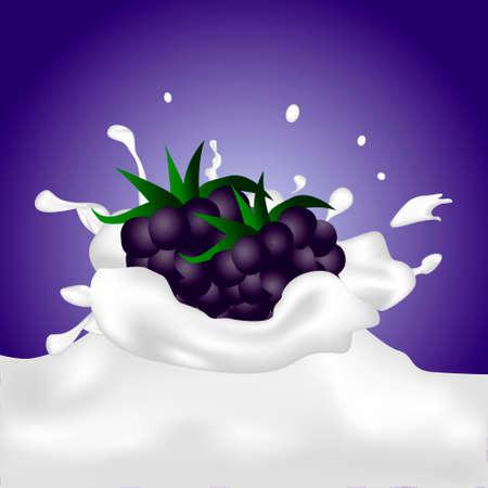 dewberry: Blackberries falling into the milky splash. Vector illustration.