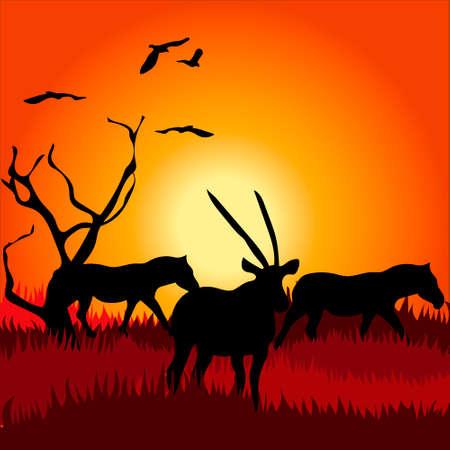 Afrika safari - silhouetten van wilde dieren in de schemering