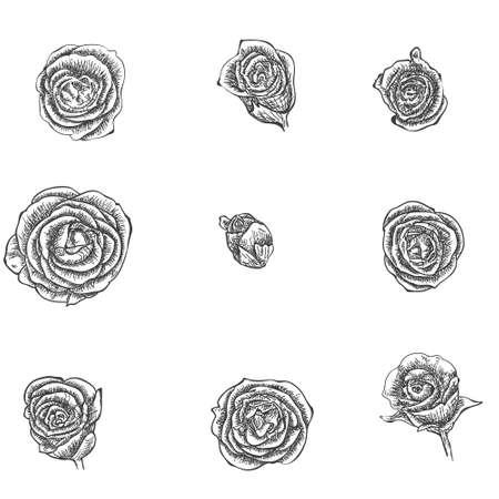 Flowers set. Hand drawn rose vector, etch style Ilustração