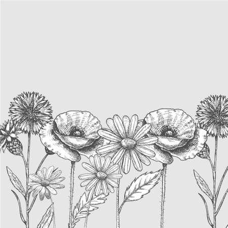 Set of wild, black and white field flowers - poppy, chamomile, cornflower,