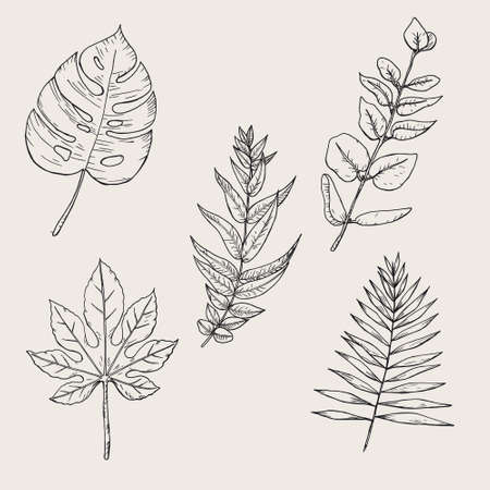 Collection of highly detailed hand drawn leaves isolated on background
