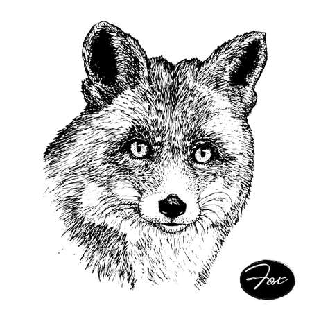Hand drawn ink fox on white background. sketch. vector