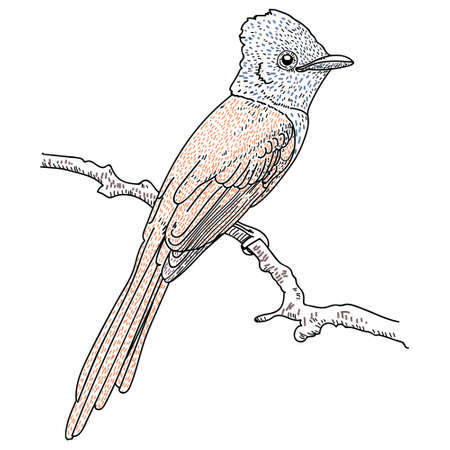 Hand Drawn Bird on Branch. vector illusration on white background