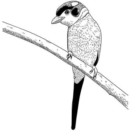 Hand drawn bird on branch vector illustration on white background.