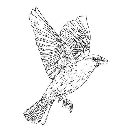 Hand Drawn Bird on Branch. vector illusration on white background