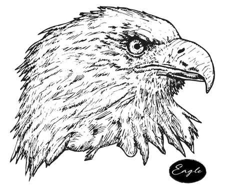 Eagle - hand drawn vector illustration isolated black