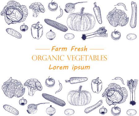 Vegetable hand drawn vintage vector illustration.