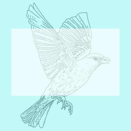 Vector illustration of a bird hand drawn.