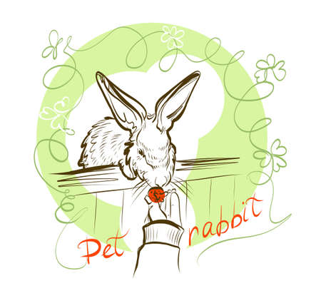 Vector illustration. Hand feeding the berries of the white rabbit. Sketch by hand with a pen. Pet rabbit.