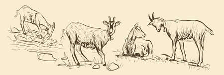 SketcSketch 4 goats grazing in a meadow horizontal position for packing vector on an isolated backgroundh 4 goats grazing in a meadow Ilustração
