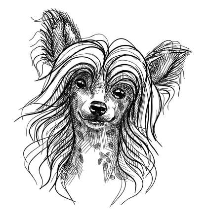 Portrait of a small dog, a Chinese crested puppy. Hand-drawn sketch with black and white pen, realistic vector illustration. Isolated background. Ilustración de vector