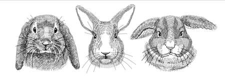 Black and white illustration, sketch drawn with a pen. Set of domestic rabbits, portraits of heads. Vector. Isolated background.