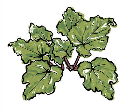 The buThe bush of the useful plant Rhubarb. Illustration sketch on an isolated background, vector.sh of the useful plant Rhubarb. Illustration sketch.