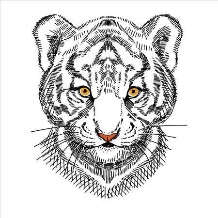 Portrait of a tiger cub, calm expression. A hand-drawn sketch.