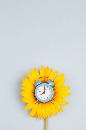Blue clock on sunflower on gray background. Place for text. Top view. Time to get up