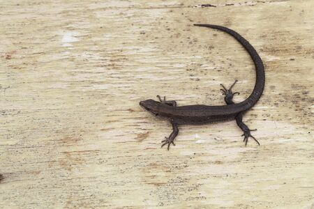 Small lizard on wood background top view 스톡 콘텐츠