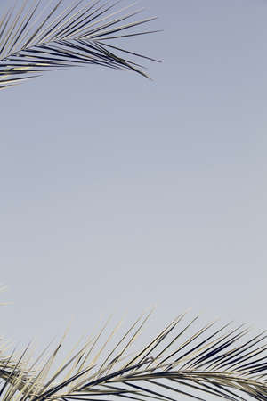 palm branch in the blue sky. summer, holidays, travel concept. nature background. minimal summer concept. copy space