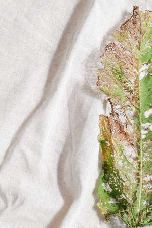 natural background. minimal, stylish concept. boho design. copy space. dry leaf on linen textile. kinfolk style Stock fotó