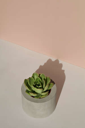 succulent in concrete pot with deep shadow on beige background .home decoration. minimal nature background. garden and minimal floral concept. Stock fotó