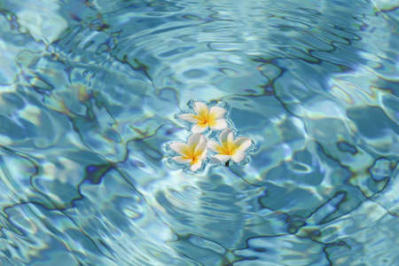 Summer, relax and spa concept. Minimal nature background. frangipani flowers in blue water in pool. Stock fotó