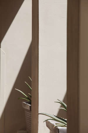 abstract lines of arches with flowers. art and design concept. shadow texture. space for text. Light and shadow on gray wall.