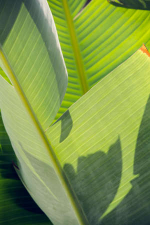 Tropical palm leaves. large palm foliage nature green background. Minimal nature concept