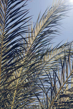palm branch in the blue sky. summer, holidays, travel concept. nature background. minimal summer concept. Stock fotó