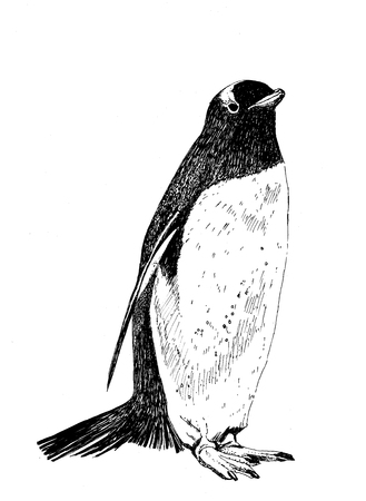 illustration of a cute penguin