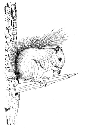 illustration of a squirrel eating a nut in a tree
