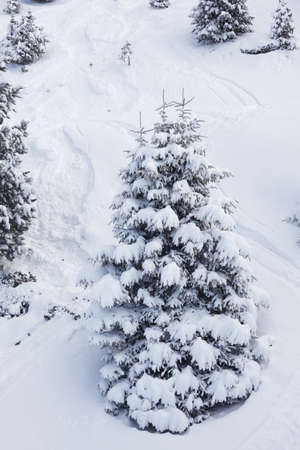 is covered: snow covered pine tree on a slope