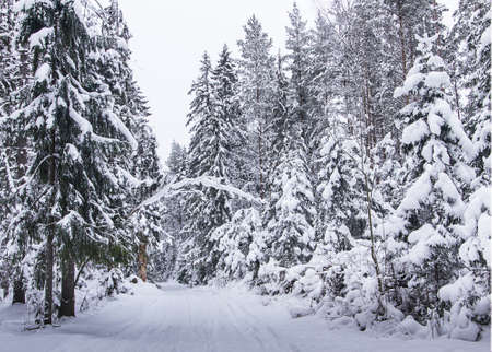 russian Winter forest snow road photo