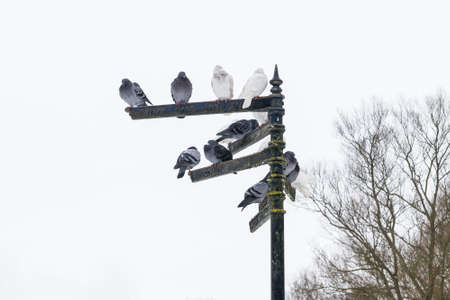 pigeons sitting on indexes in St Albans, England photo