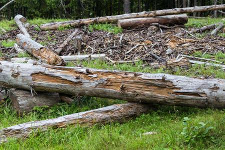 dead tree: deforestation Stock Photo