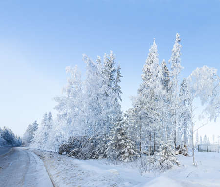 russian winter forest road in snow photo